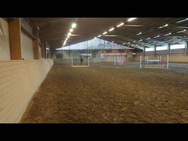 Häst 3 framridning 3