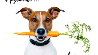 Нужно ли включать в рацион собак фрукты и овощи?🍏🍓🍒🍐🍎🌽