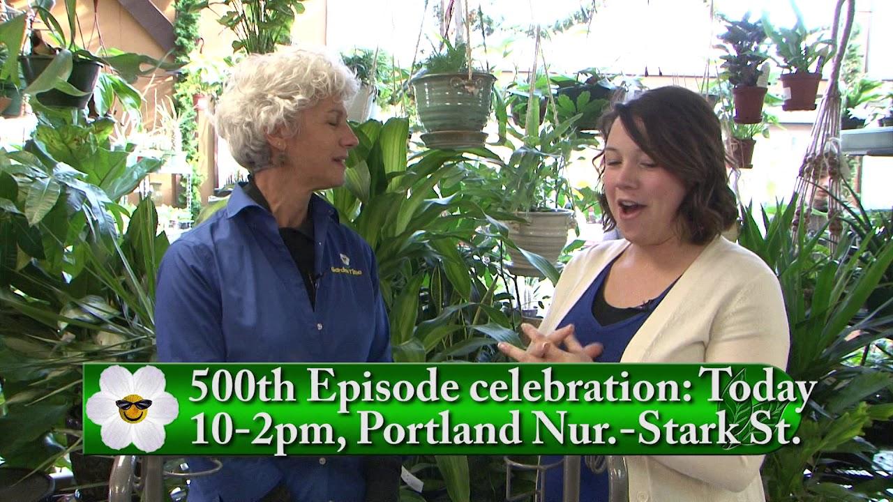 Portland Nursery Wreaths 500th Celebration