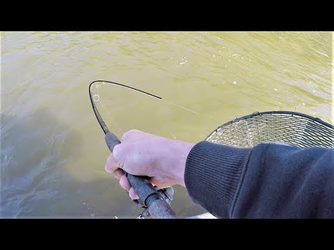 Live Bait Fishing For The Most DELICIOUS Fish In The River!