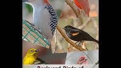 Identify Your Common Backyard Birds