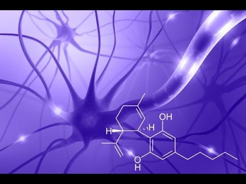 What CBD Oil Effects | Cannabidiol Research | CNN High Profits