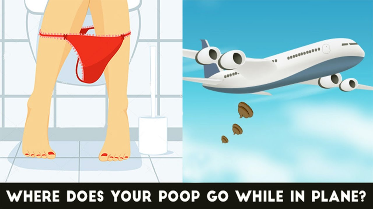 what happens to your in an airplane toilet youtube