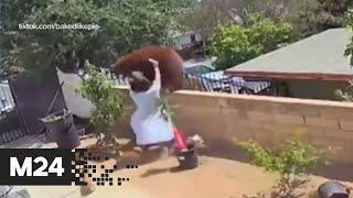Женщина в Калифорнии столкнула медведя с забора, защищая своих собак - Москва 24