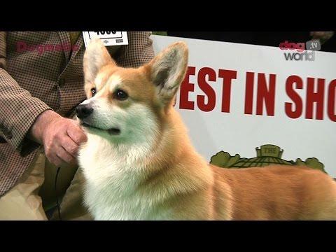 Birmingham National Dog Show 2016 - Best in Show