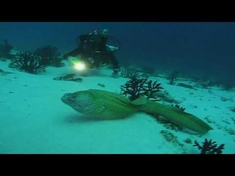 Aldabra Atoll Seychelles Travel / Diving Tipps