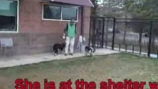 *adopted*  Daisy A164933 Humane Society Adopt