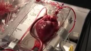 Le cœur de la cage thoracique surnaturel