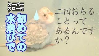 ご視聴ありがとうございます。 初めての水浴びではしゃぎ過ぎた(?私に...