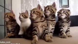 Милая подборка - котятки играют, делают массаж, резвятся, развлекают деток