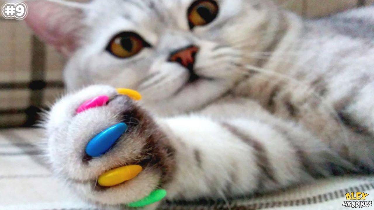 10 лайфхаков для владельцев кошек - YouTube