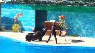 видео Витязево - отдых с детьми