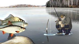 Где ловить рыбу по первому льду Где искать рыбу на зимней рыбалке по первому льду
