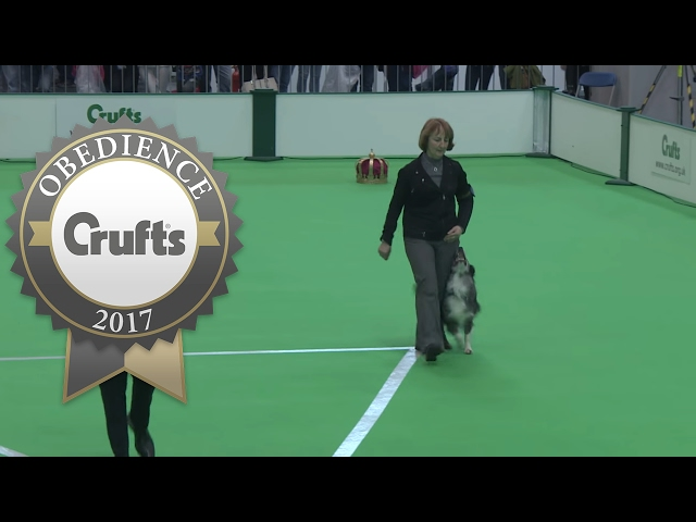 Obedience Championship - Bitches - Part 8 | Crufts 2017