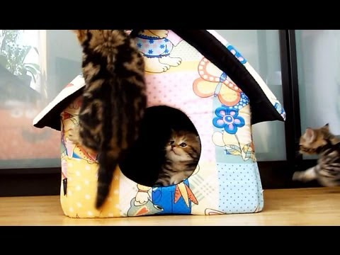 Funny kittens and a new house .  Funny Cats and Cute Kitten