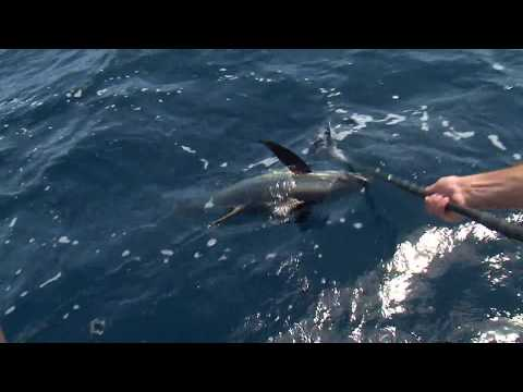 MS Outdoors S28 E01 - Gulf of Mexico Tuna, Howard Miller WMA Dove