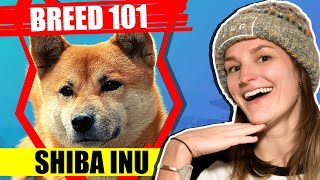 BREED 101 SHIBA INU! Everything You Need To Know About The SHIBA INU