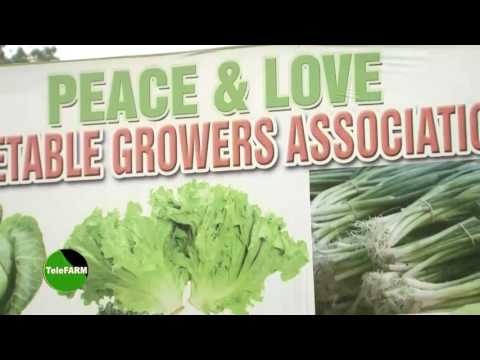 Peace and Love Vegetable Growers Association Ghana, Vegetabl