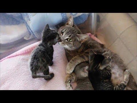В беременную кошку кто то выстрелил! Парализованная мурлыка выжила только ради котят…