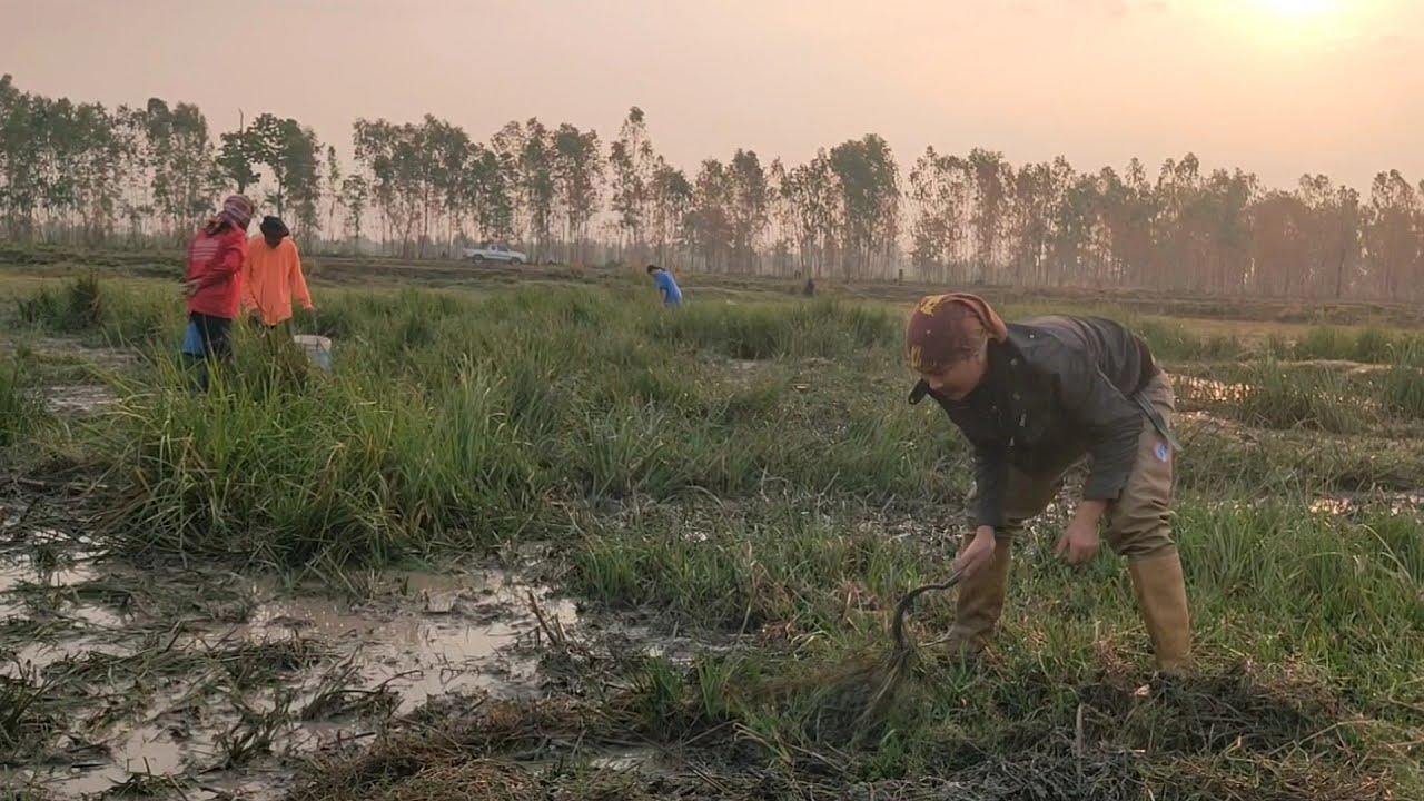 หลังจากฝนตกชาวบ้านพากันมาหาของกินตามริมน้ำริมหนองวิถีชาวบ้าน