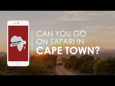 Can you go on Safari in Cape Town? Rhino Africa's Travel Tips