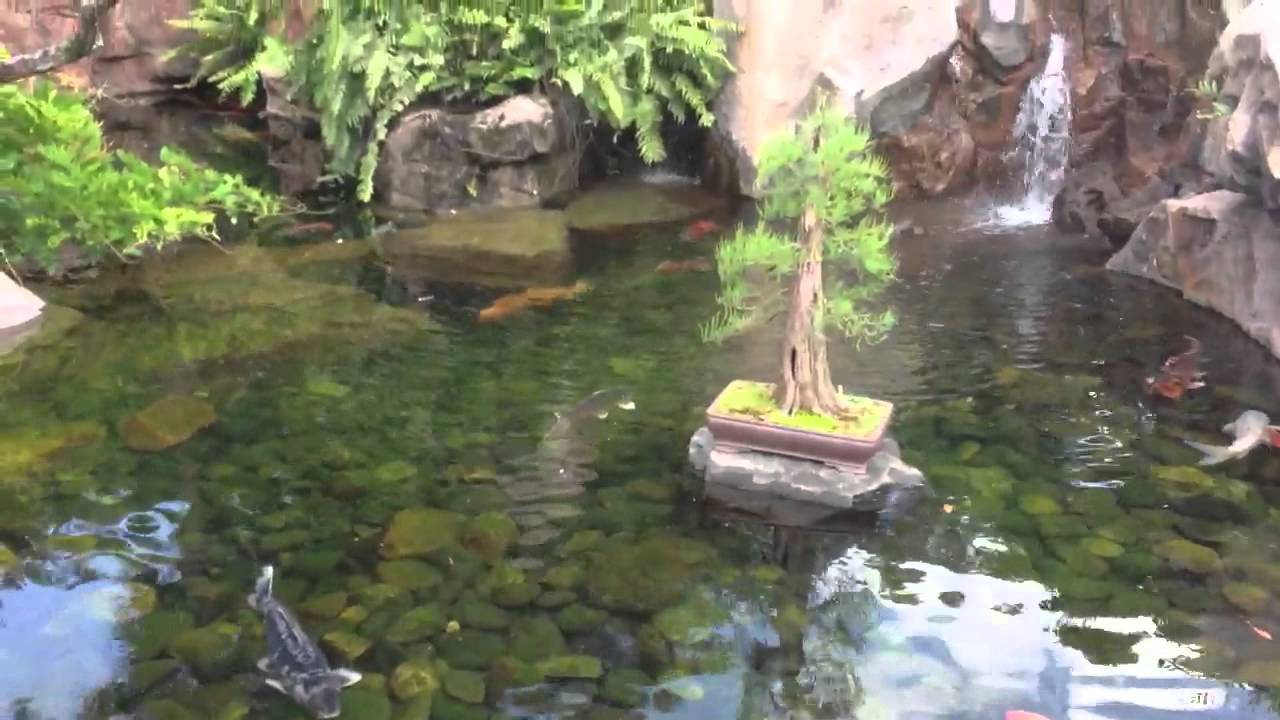 Koi pond Disney Japanese gardens Florida YouTube