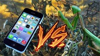 Неожиданное нападение богомола или как разбить айфон