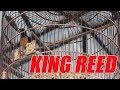 Mbi Aksi Murai Batu King Reed Di Konyian Cup Singkawang  Mp3 - Mp4 Download