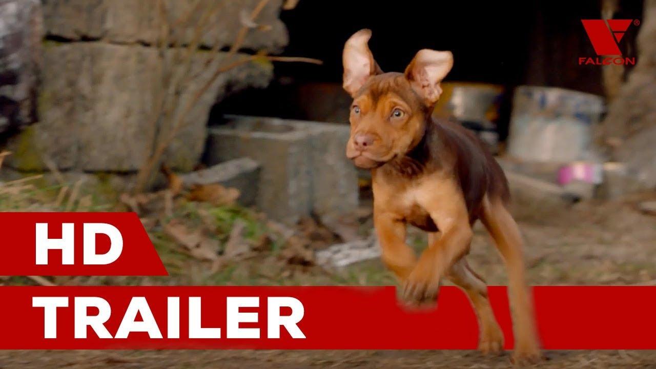 Psí domov (2019) HD trailer   CZ dabing