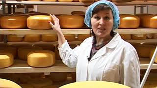 В А-Судженске начато производство твердого сорта сыра «Гауда».