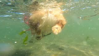 Nemo + Corgi = ?