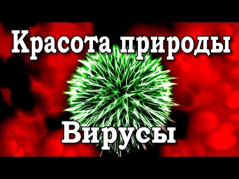 картинки вирусов строение бактериофаги
