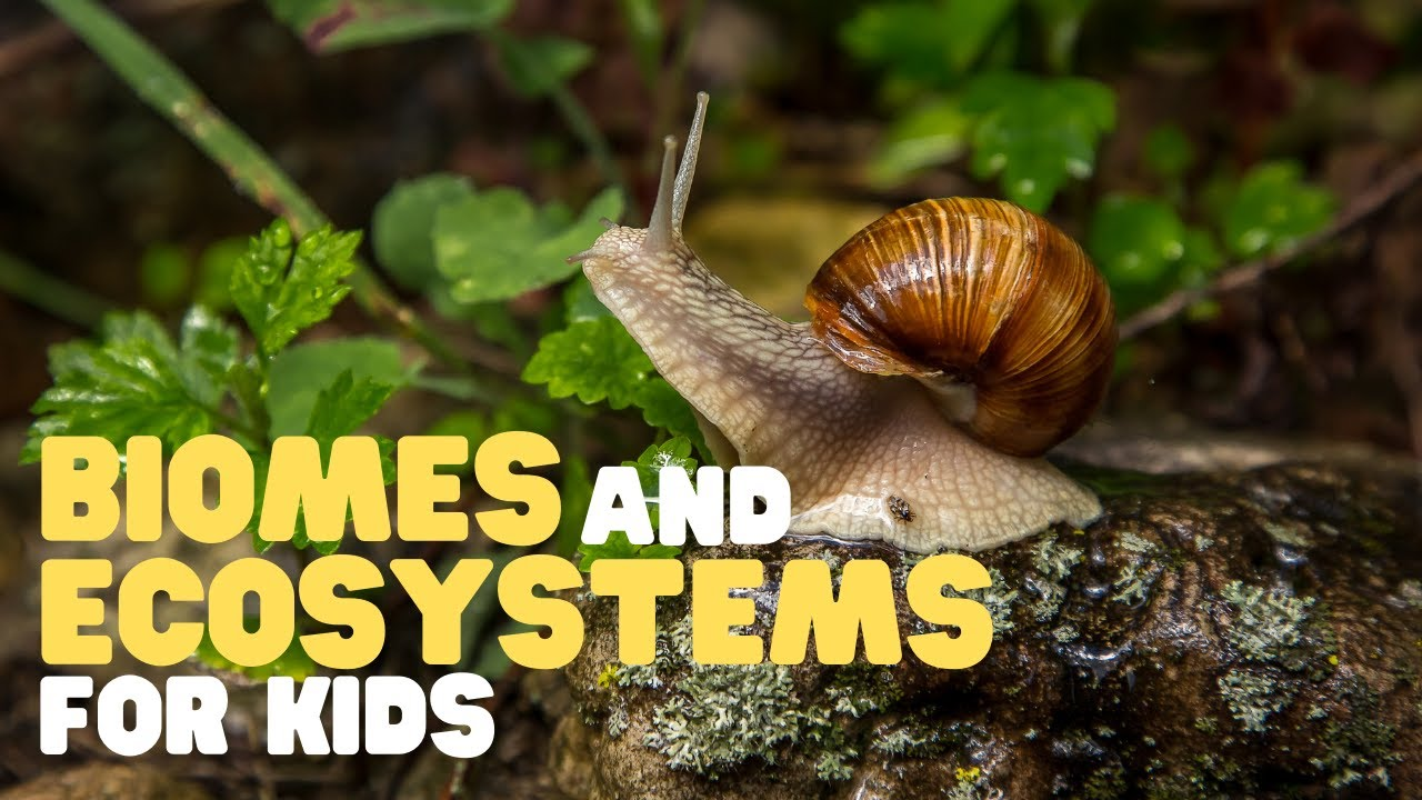 Biomes and Ecosystems for Kids   Learn about the different types of  ecosystems and biomes - YouTube [ 720 x 1280 Pixel ]