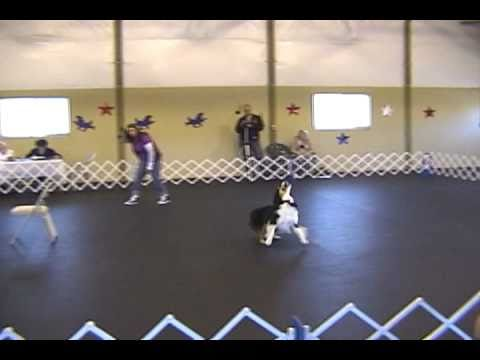 Canine Musical Freestyle TV Medley Michele & Listo