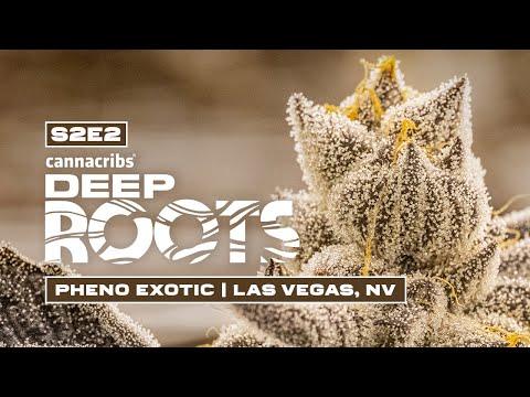 Pheno Hunting Exotic Cannabis Strains with Pheno Hunter S. Thompson – Deep Roots: Pheno Exotic