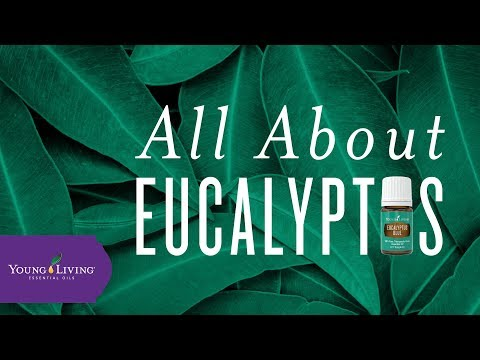 all-about-eucalyptus-|-young-living-essential-oils