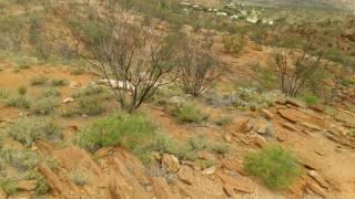 オーストラリア ノーザンテリトリー アリススプリングス ボルタニックガーデン カンガルー