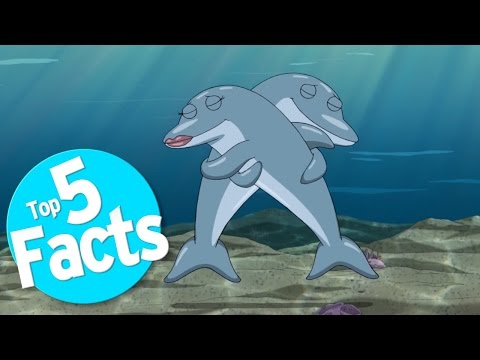 top-5-freaky-facts-about-dolphin-sex