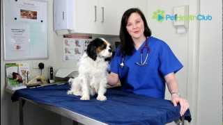 The PetHealthClub - Otitis Externa (Ear Infections) in Dogs Explained