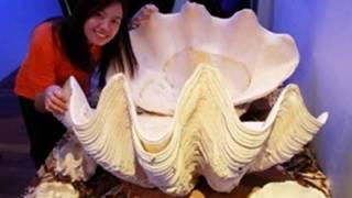 Рыбак держал под кроватью 100 миллионов долларов, не зная об этом!Жемчужина весом в 34 кг.