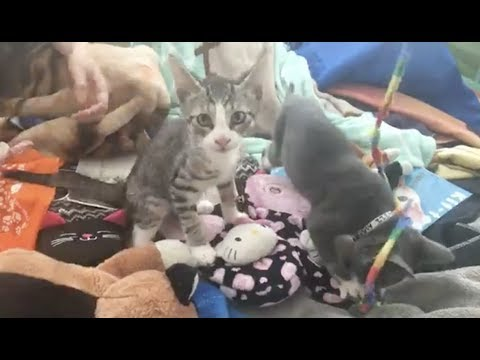 LIVE: Adoptable Kitten Slumber Party | The Dodo + Meow for Now