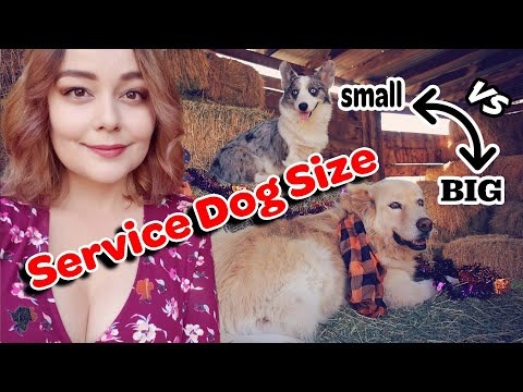 Large vs Small Service Dog | Major Differences