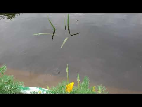 Пруд с рыбой на даче