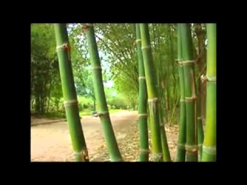 Value Chain Of Bamboo And Rattan Youtube
