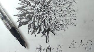 Pen & Ink Drawing Tutorials | How to draw a dahlia flower with a flex nib fountain pen