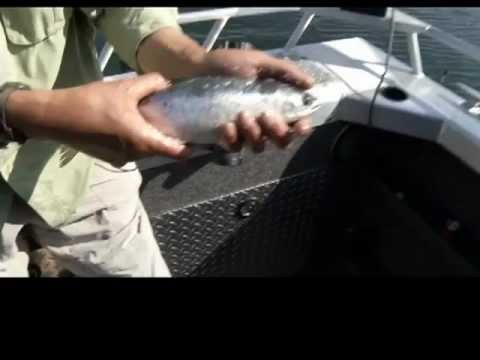 Go Fish BC: Downrigger Fishing For Kokanee