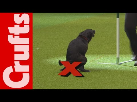 Thumbnail: HILARIOUS - Dog takes a dump on TV - Crufts 2012 Bloopers