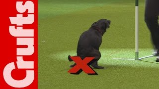Repeat youtube video HILARIOUS - Dog takes a dump on TV - Crufts 2012 Bloopers