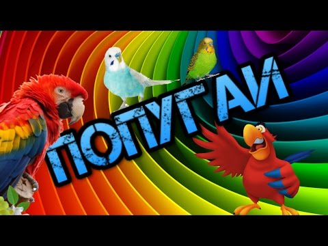 Приколы с попугаями – видео с попугаями смотреть в хорошем