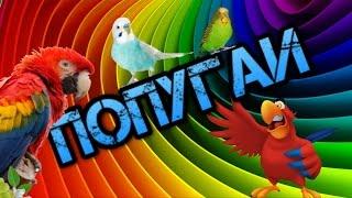 Приколы с попугаями. Смешные попугаи. Попугайчики